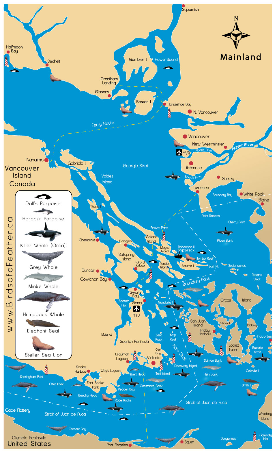 Orcas Island Whale Watching Tours