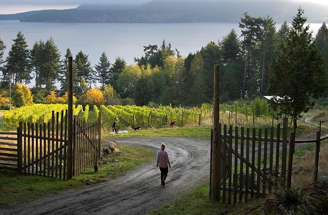 Cedar Winery Long Island