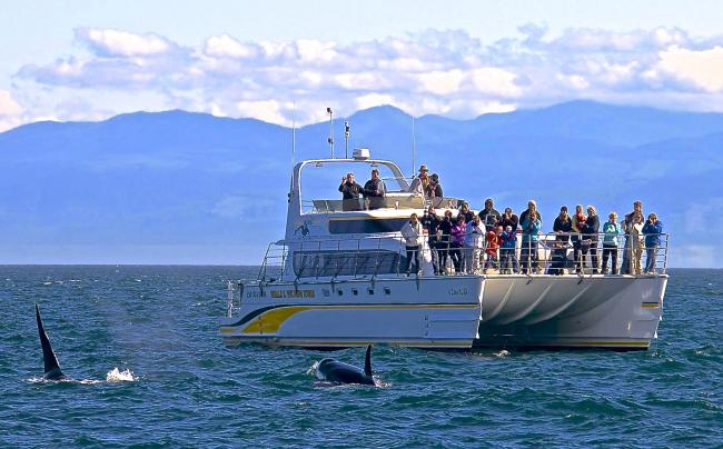 whale watching Victoria 4 hours catamaran